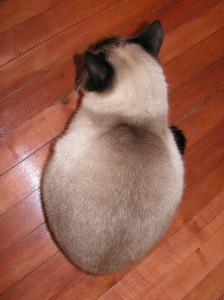 Siamese Droplet