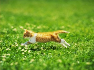Leaping through the grass