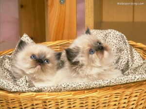 Aren't these kittens adorable, Prince Tantra?